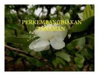 CORAK PERKEMB TAN.pdf